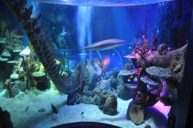 sea life helsingfors tallink silja symphony