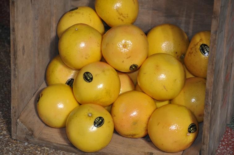 florida grapefrukt