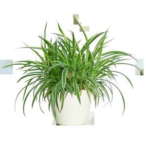 De 5 bästa luftrenande krukväxterna - Lindas Matstuga