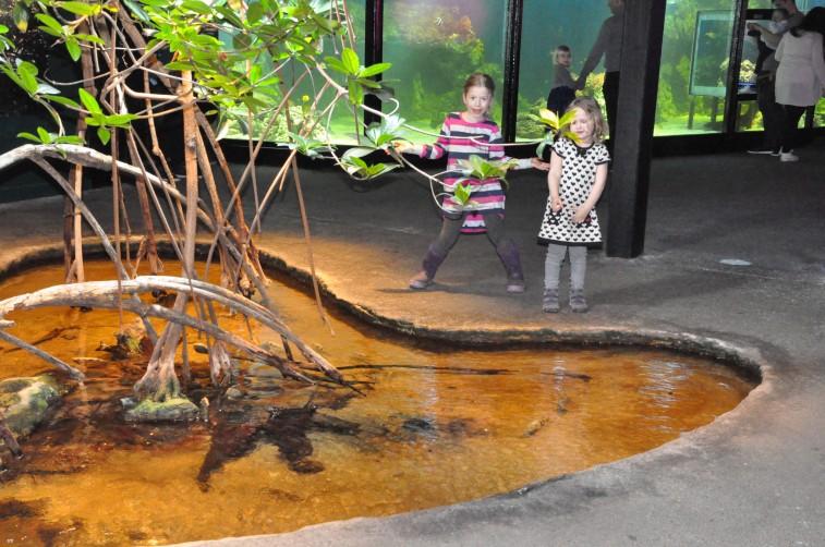 Vi var inbjudna på premiären av Aquaria Vattenmuseums nya havsutställning.
