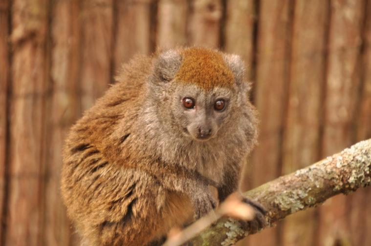 Parken zoo Eskiltuna djurpark smygpremiär