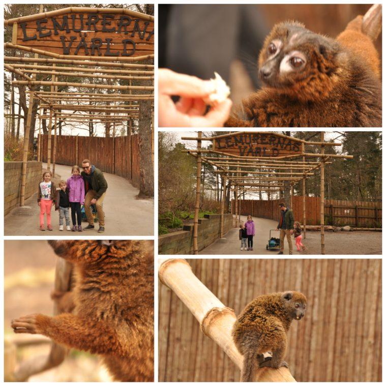 Parken zoo lemurernas värld lemurpark